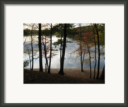 Walden Pond In Autumn Framed Print By Sheila Savage
