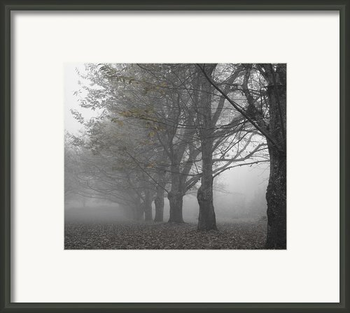 Walk With Me - Chestnut Trees In Fog Framed Print By Georgia Fowler