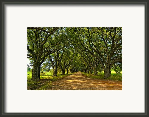 Walk With Me Framed Print By Steve Harrington