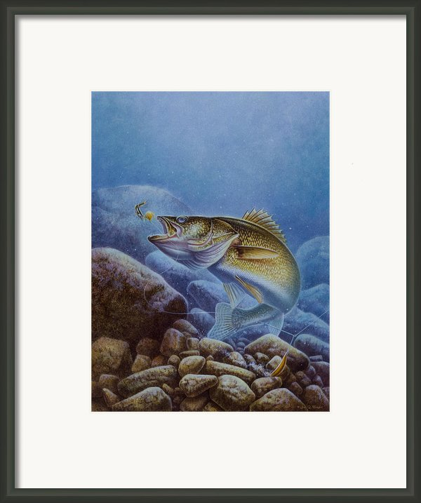 Walleye And Lindy Framed Print By Jon Q Wright