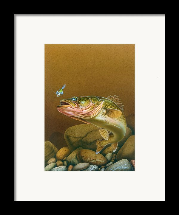 Walleye And Spinner Jig Framed Print By Jon Q Wright