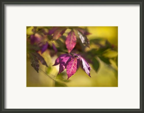 Warm Light Framed Print By Christina Rollo