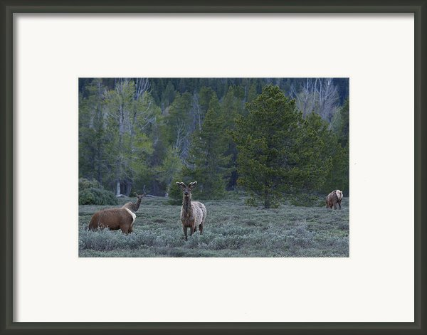 Watchful Framed Print By Charles Warren