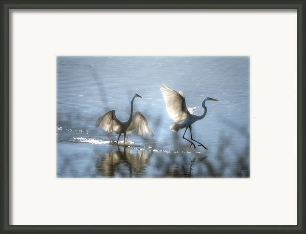 Water Ballet  Framed Print By Saija  Lehtonen