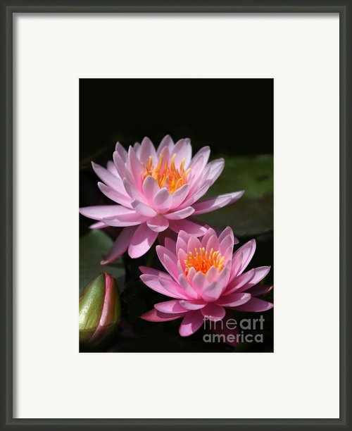 Water Lilies Love The Sun Framed Print By Sabrina L Ryan