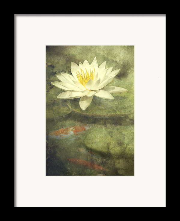 Water Lily Framed Print By Scott Norris
