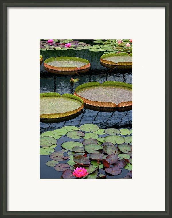 Waterlilies And Platters 2 Framed Print By Byron Varvarigos
