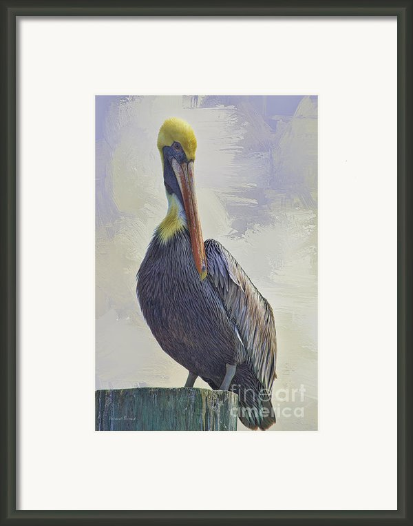 Waterway Pelican Framed Print By Deborah Benoit