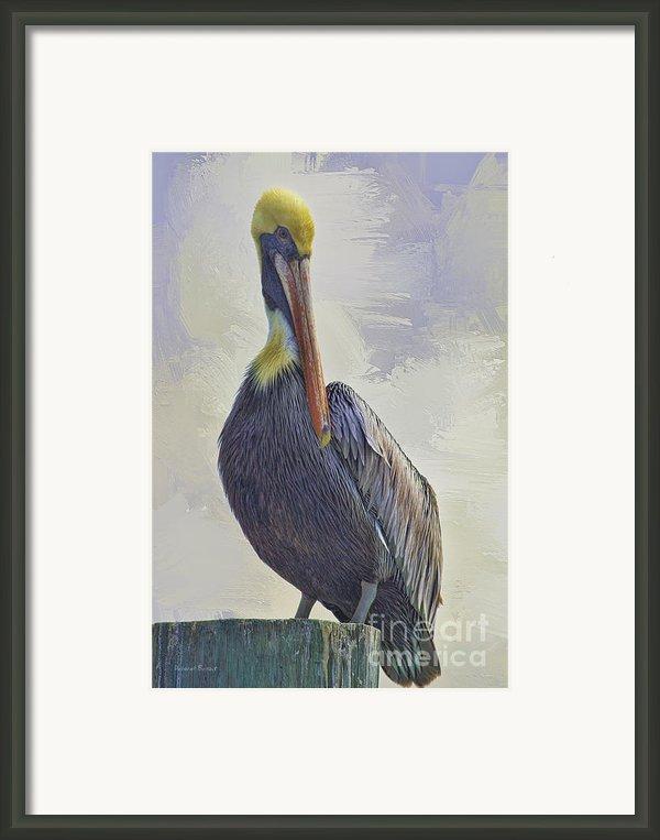 Waterway Pelican Framed Print By Deborah Benoit
