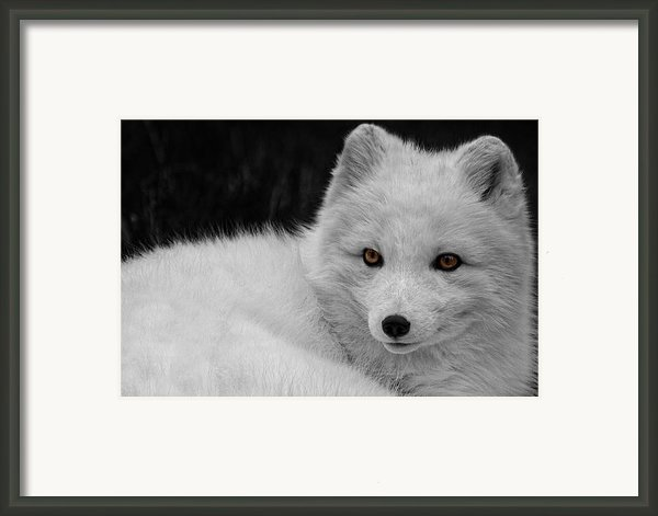 Wee Arctic Hunter D3613 Framed Print By Wes And Dotty Weber