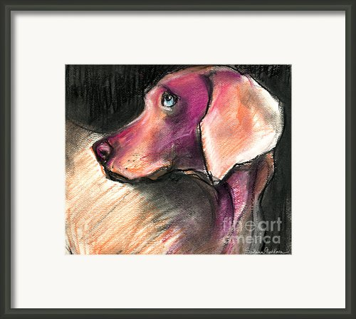 Weimaraner Dog Painting Framed Print By Svetlana Novikova