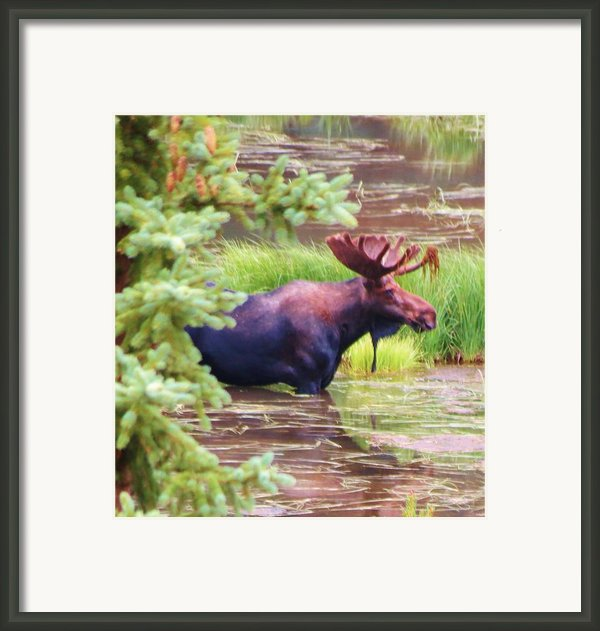 Wet And Wild Framed Print By Feva  Fotos