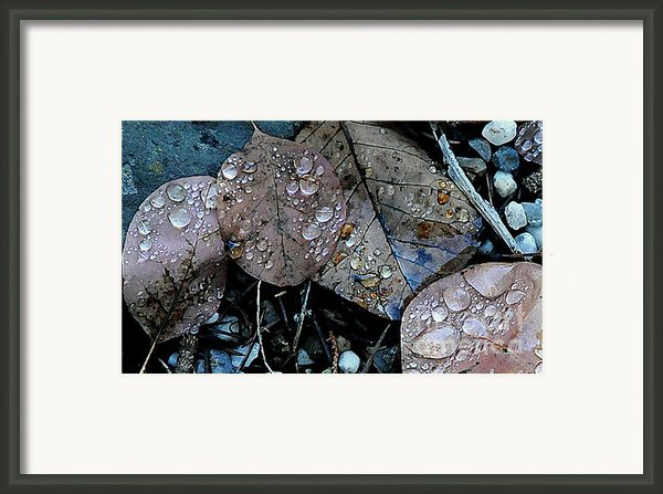 Wet Leaves Framed Print By Artist And Photographer Laura Wrede