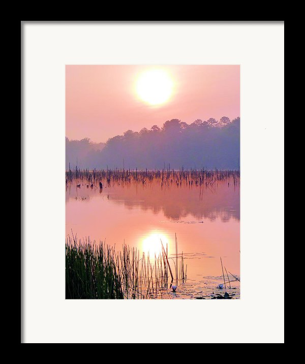 Wetlands Sunrise Framed Print By Jc Findley