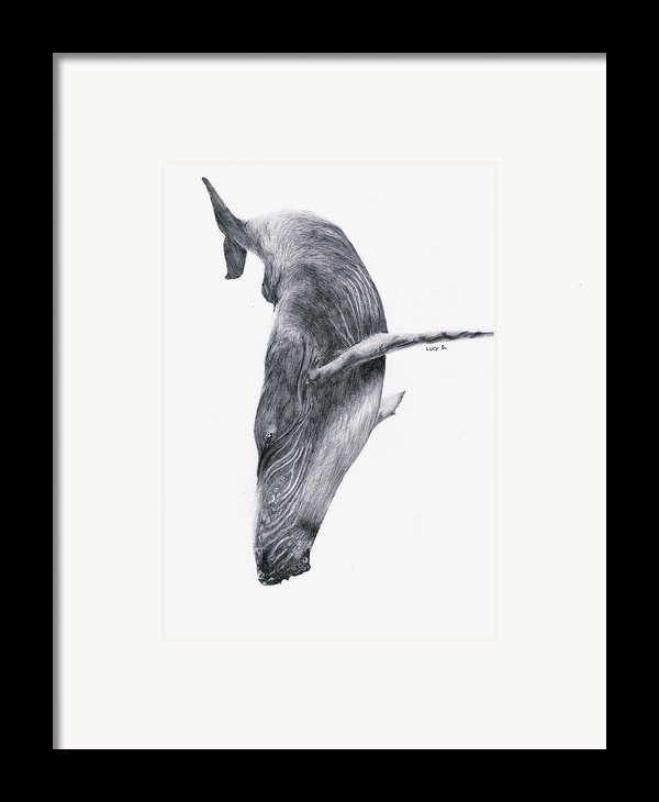 Whale Framed Print By Lucy D