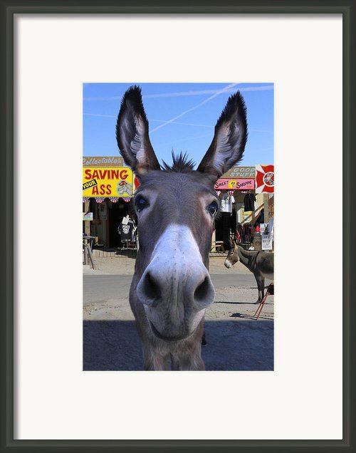 What . . . No Carrots Framed Print By Mike Mcglothlen