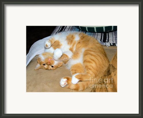Whats Up? Framed Print By Cheryl Poland