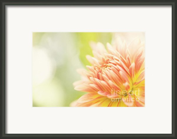When Summer Dreams Framed Print By Reflective Moments  Photography And Digital Art Images
