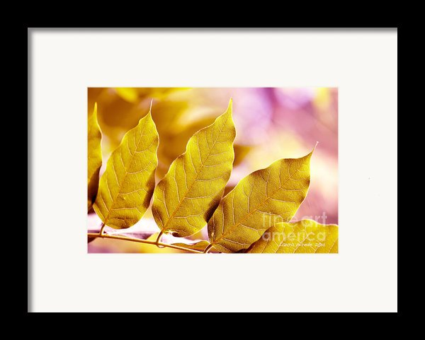 When The Leaves Turn Gold Framed Print By Artist And Photographer Laura Wrede