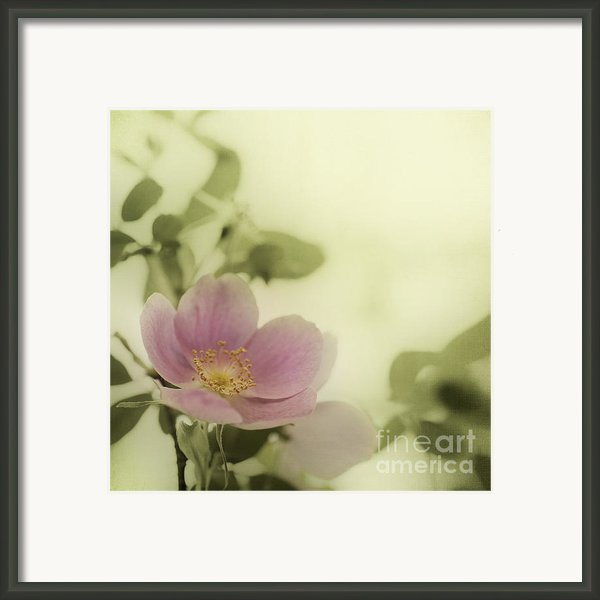 Where The Wild Roses Grow Framed Print By Priska Wettstein