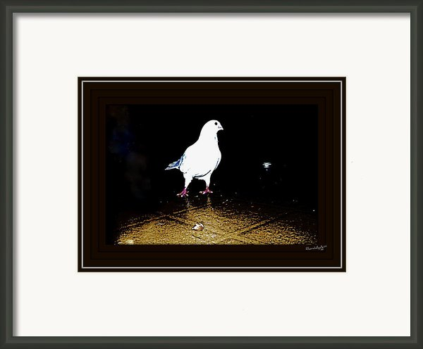 White Dove Framed Print By Yomamabird Rhonda
