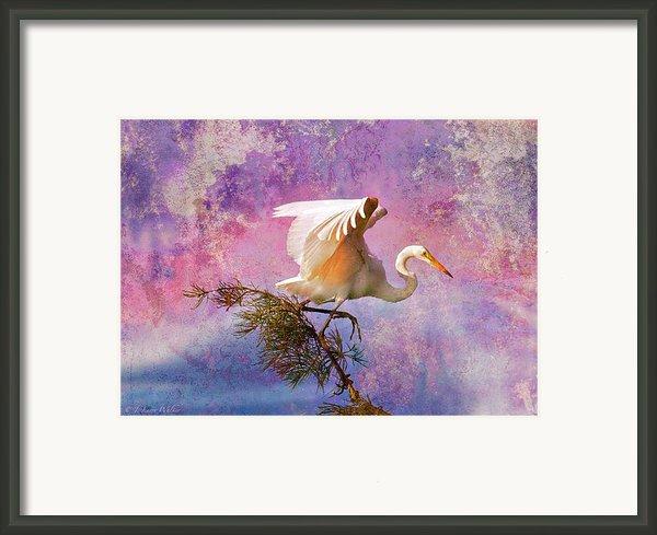 White Lake Swamp Egret Framed Print By J Larry Walker