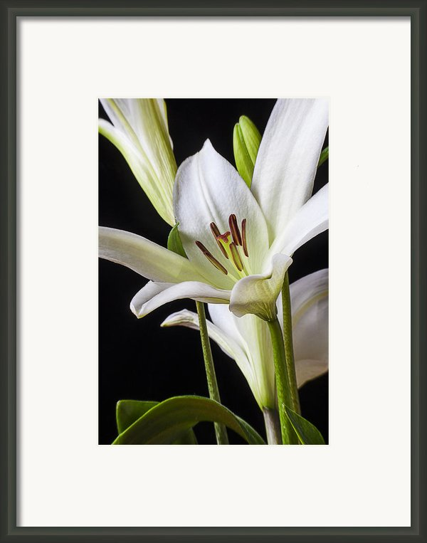 White Lily Framed Print By Garry Gay