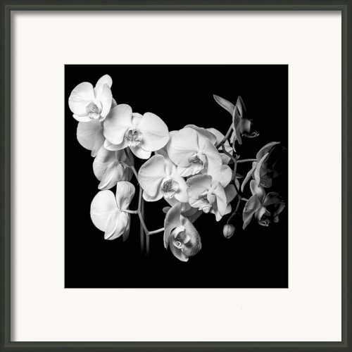 White Orchid - Black And White Framed Print By Erik Brede