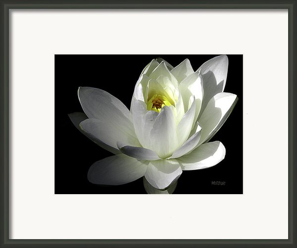 White Petals Aquatic Bloom Framed Print By Julie Palencia
