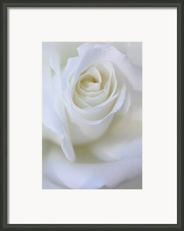White Rose Floral Whispers Framed Print By Jennie Marie Schell