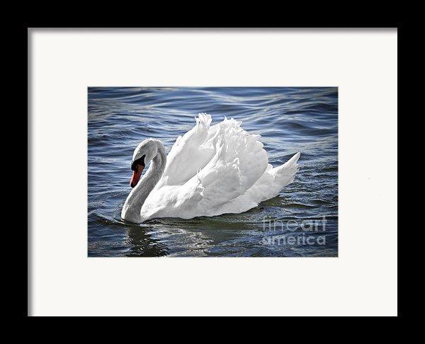White Swan On Water Framed Print By Elena Elisseeva
