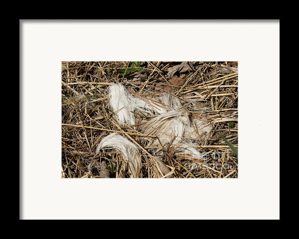 White-tailed Deer Hair Framed Print By Linda Freshwaters Arndt