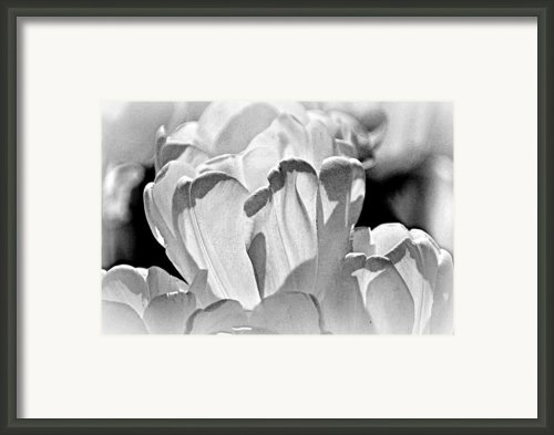 White Tulip Framed Print By Marty Koch