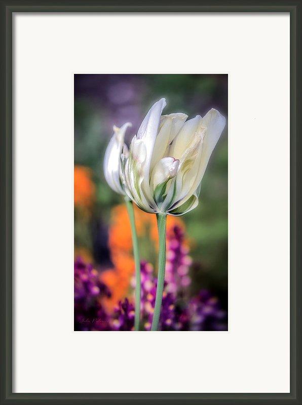 White Tulip Splash Of Color Framed Print By Julie Palencia