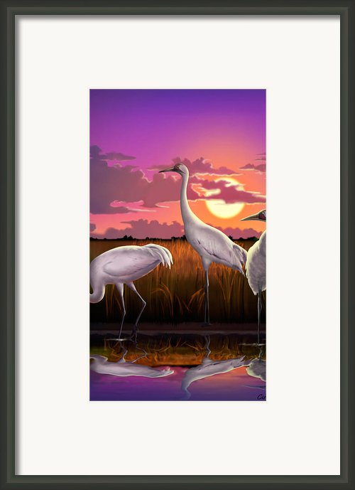 Whooping Cranes Tropical Florida Everglades Sunset Birds Landscape Scene Purple Pink Print Framed Print By Walt Curlee