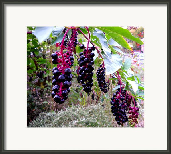 Wild Berry Framed Print By  George Griffiths