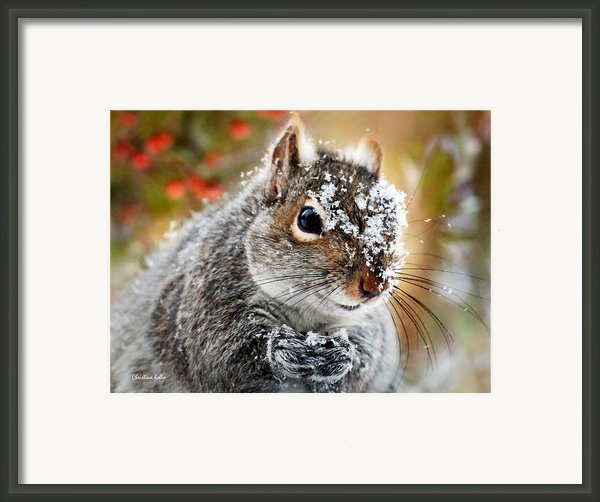 Wild Expedition Framed Print By Christina Rollo