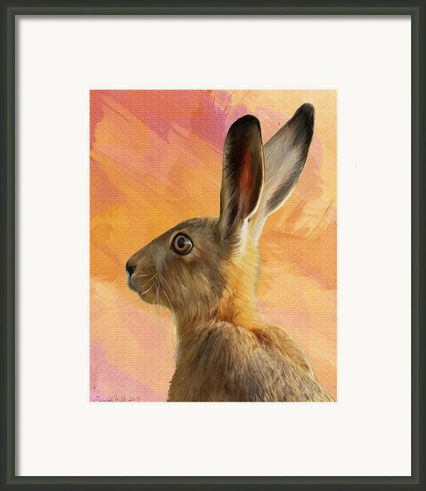 Wild Hare Framed Print By Tanya Hall