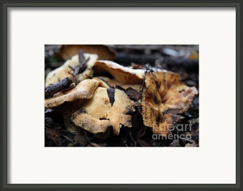 Wild Mushrooms On The Forest Floor - 5d21078 Framed Print By Wingsdomain Art And Photography