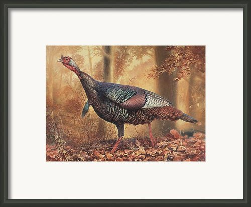 Wild Turkey Framed Print By Hans Droog