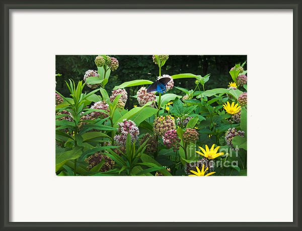 Wildflower Meadow Framed Print By Kenneth Murray
