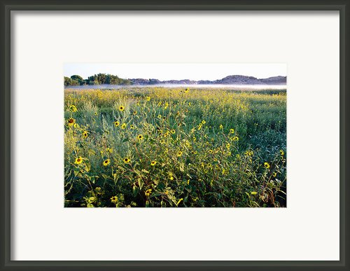 Wildflowers Framed Print By Jag Fergus