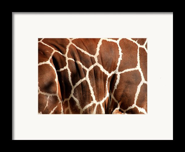Wildlife Patterns  Framed Print By Aidan Moran