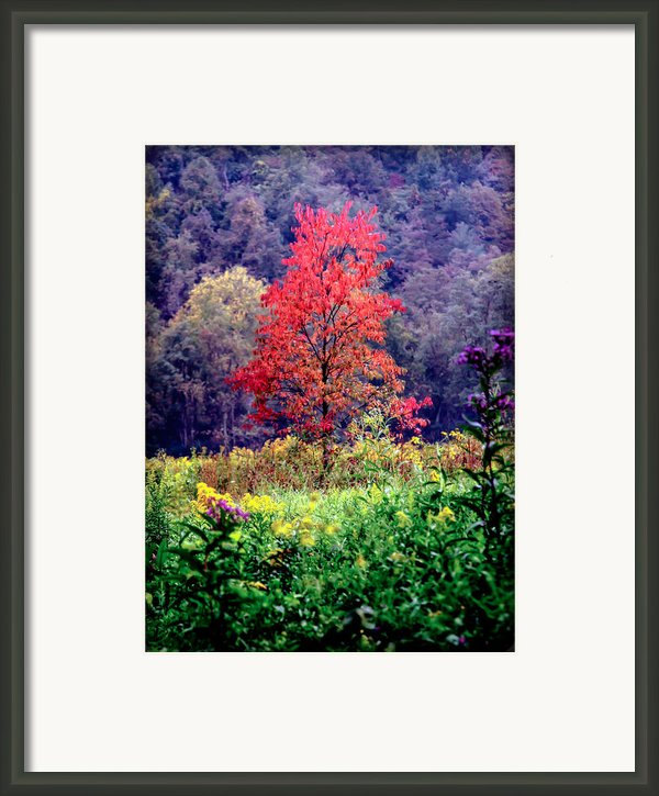 Wildwood Flowers Framed Print By Karen Wiles