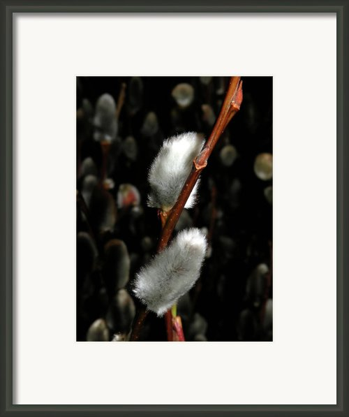 Willow Framed Print By Trish Tritz