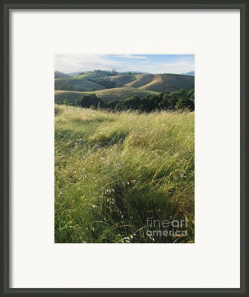 Wine Country Hills Framed Print By Stu Shepherd