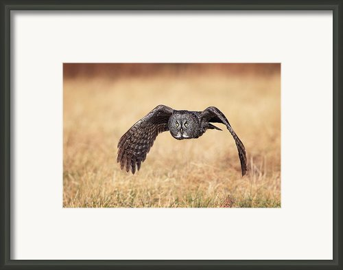 Wings Of Motion Framed Print By Daniel Behm