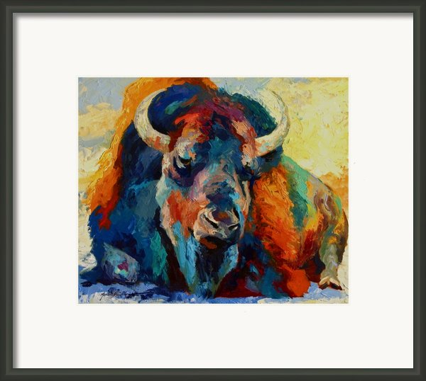 Winter Bison Framed Print By Marion Rose