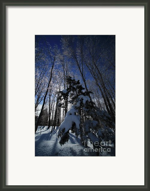 Winter Blue Framed Print By Karol  Livote