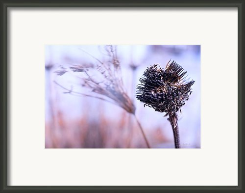Winter Flowers  Framed Print By Bob Orsillo